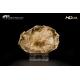 Legno fossile silicizzato (opale xiloide)