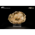Legno fossile silicizzato (opale xiloide) - VGT A 44