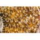 Cleoniceras sp.