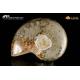 Cleoniceras sp. piritizzata