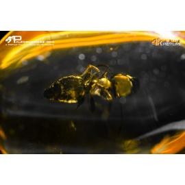 Ambra con formica