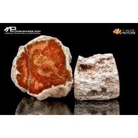 Legno fossile silicizzato (opale xiloide) - lotto di due campioni