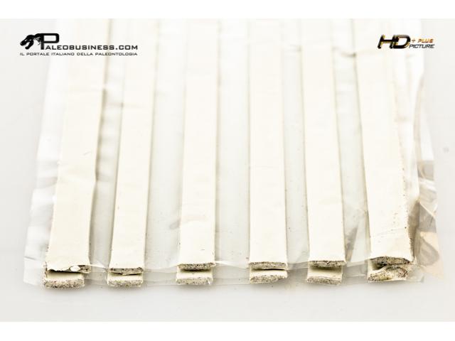 Plastilina per fossili bianca