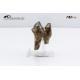 Dente di Diprotodon australis